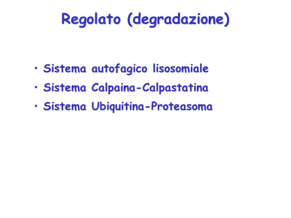 Regolato (degradazione)