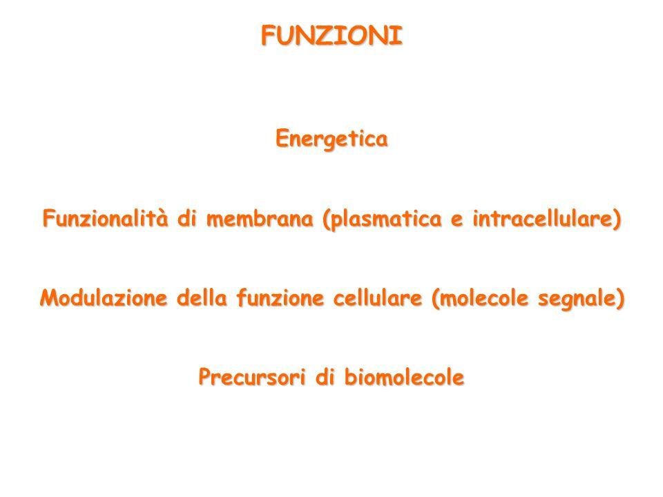 FUNZIONI Energetica. Funzionalità di membrana (plasmatica e intracellulare) Modulazione della funzione cellulare (molecole segnale)
