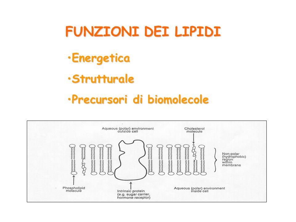FUNZIONI DEI LIPIDI Energetica Strutturale Precursori di biomolecole