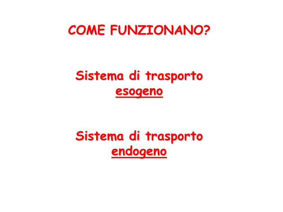 Sistema di trasporto esogeno Sistema di trasporto endogeno