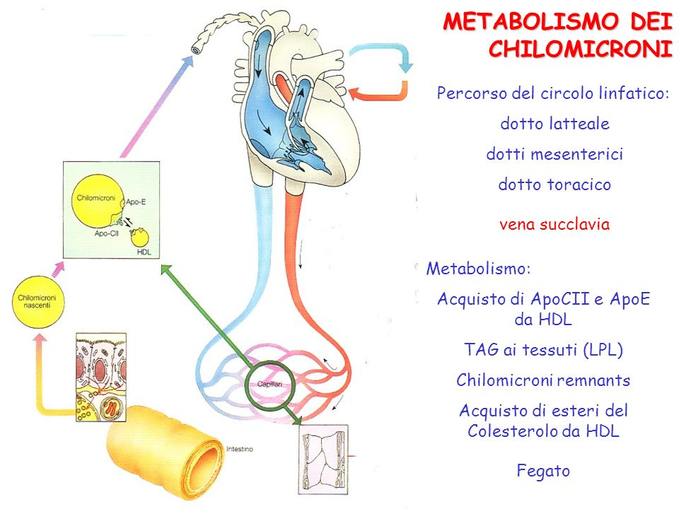 METABOLISMO DEI CHILOMICRONI