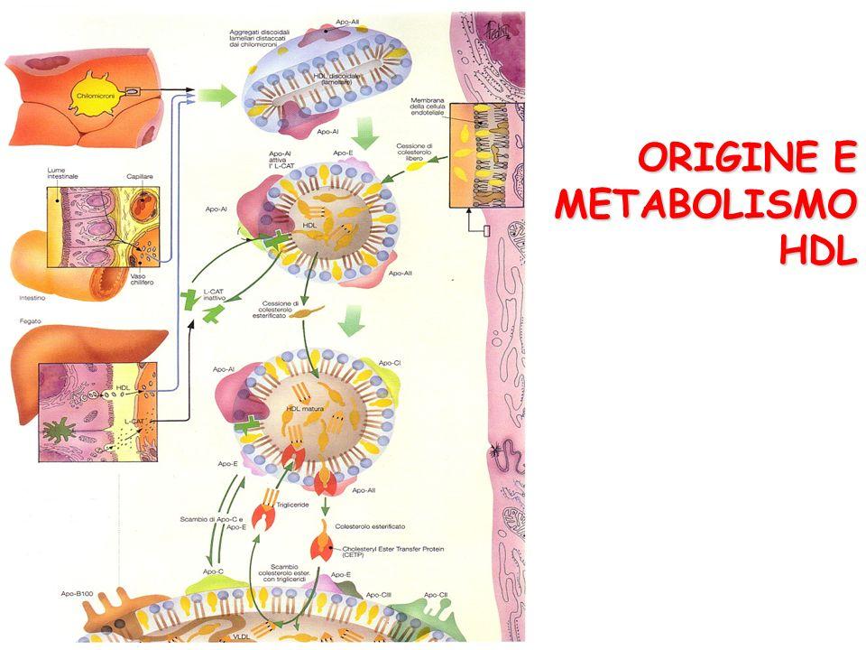 ORIGINE E METABOLISMO HDL