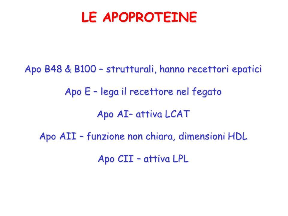 LE APOPROTEINE Apo B48 & B100 – strutturali, hanno recettori epatici