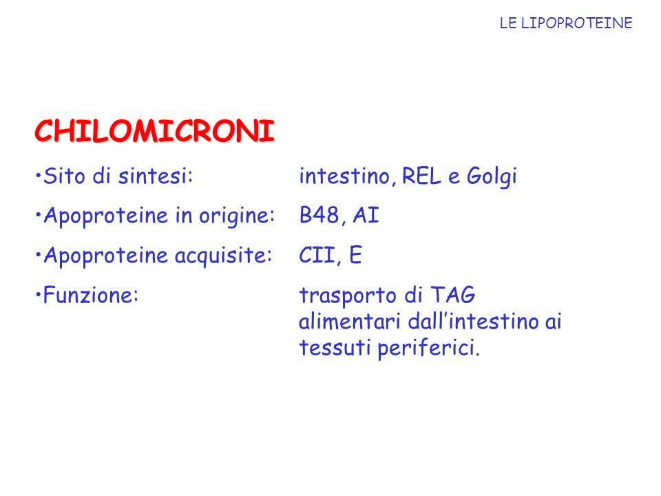 CHILOMICRONI Sito di sintesi: intestino, REL e Golgi