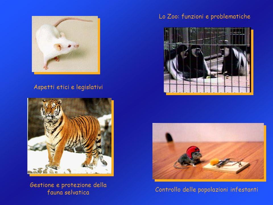 Lo Zoo: funzioni e problematiche