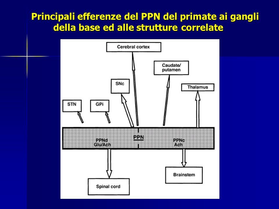 Principali efferenze del PPN del primate ai gangli della base ed alle strutture correlate