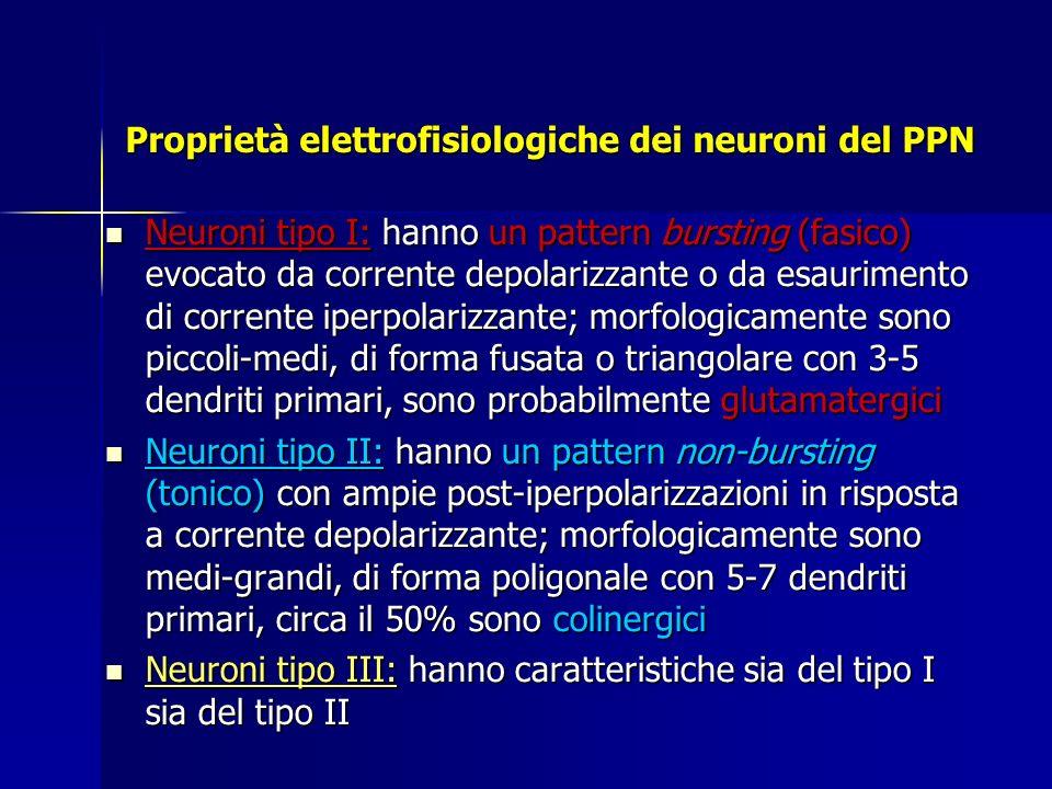 Proprietà elettrofisiologiche dei neuroni del PPN