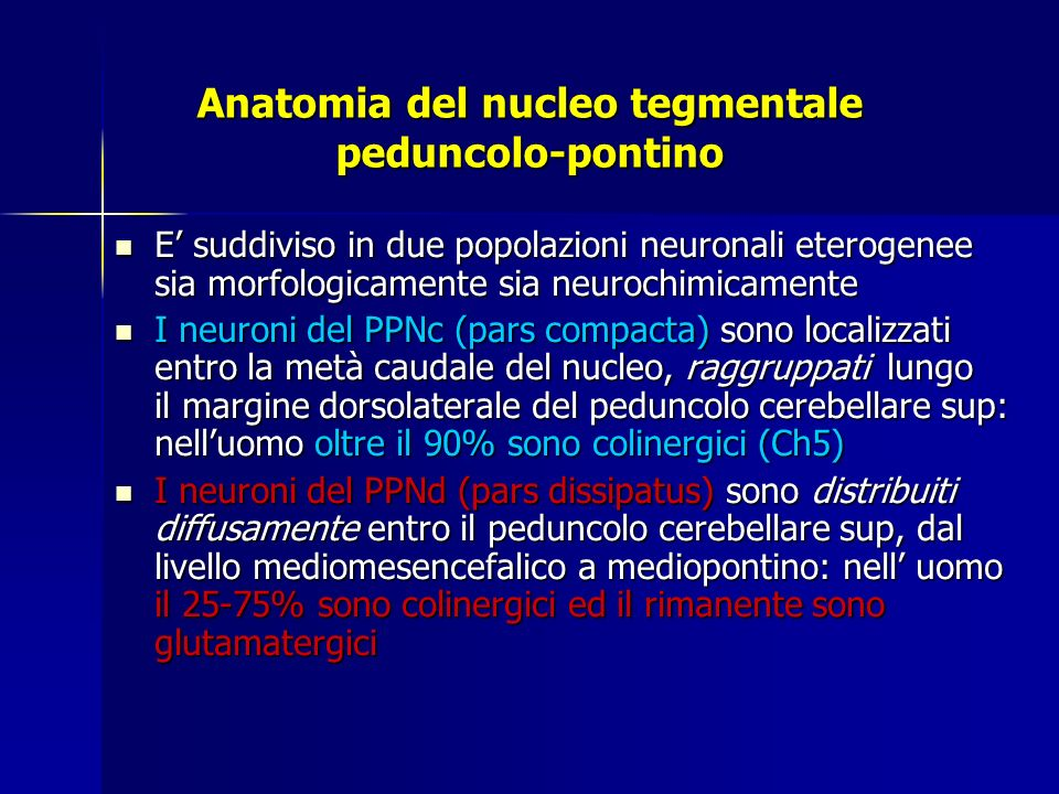 Anatomia del nucleo tegmentale peduncolo-pontino