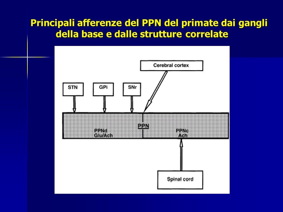 Principali afferenze del PPN del primate dai gangli della base e dalle strutture correlate