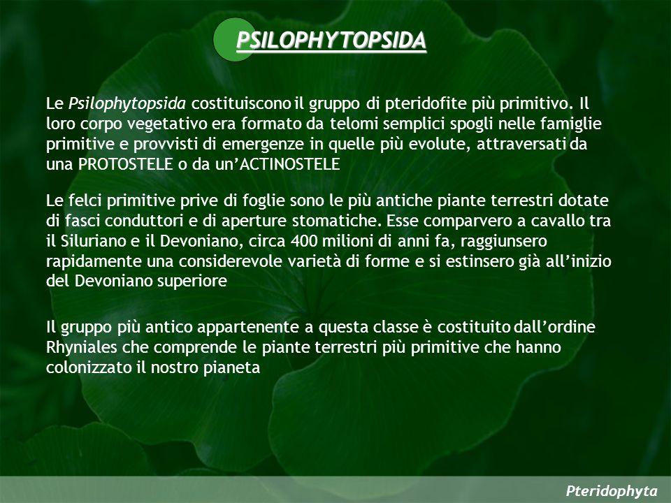 PSILOPHYTOPSIDA