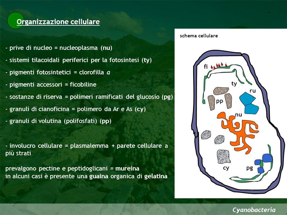 Organizzazione cellulare