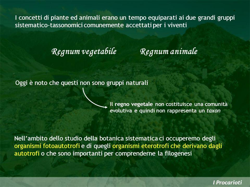 Regnum vegetabile Regnum animale