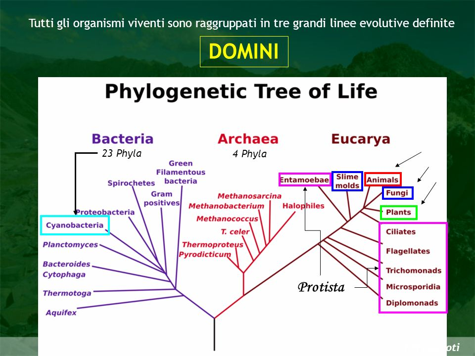 Tutti gli organismi viventi sono raggruppati in tre grandi linee evolutive definite