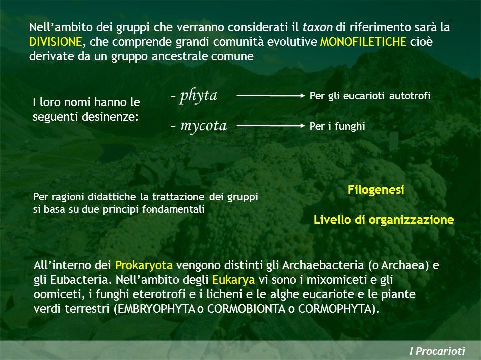 Nell'ambito dei gruppi che verranno considerati il taxon di riferimento sarà la DIVISIONE, che comprende grandi comunità evolutive MONOFILETICHE cioè derivate da un gruppo ancestrale comune