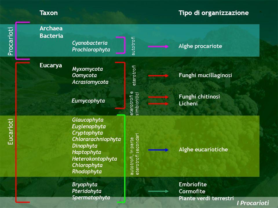 Tipo di organizzazione