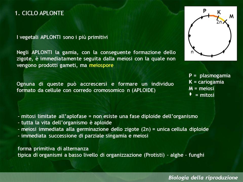 1. CICLO APLONTE P K M I vegetali APLONTI sono i più primitivi