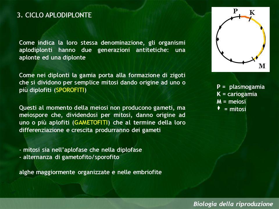 3. CICLO APLODIPLONTE P K M
