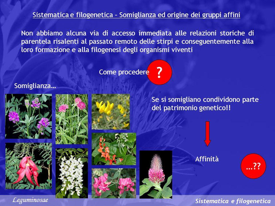 Sistematica e filogenetica – Somiglianza ed origine dei gruppi affini