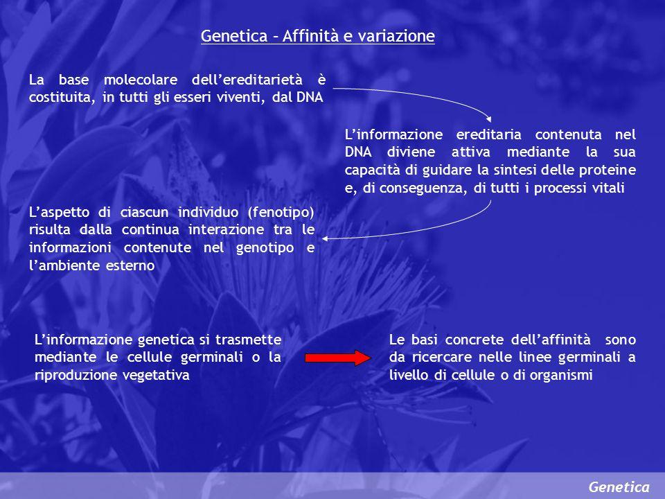 Genetica – Affinità e variazione