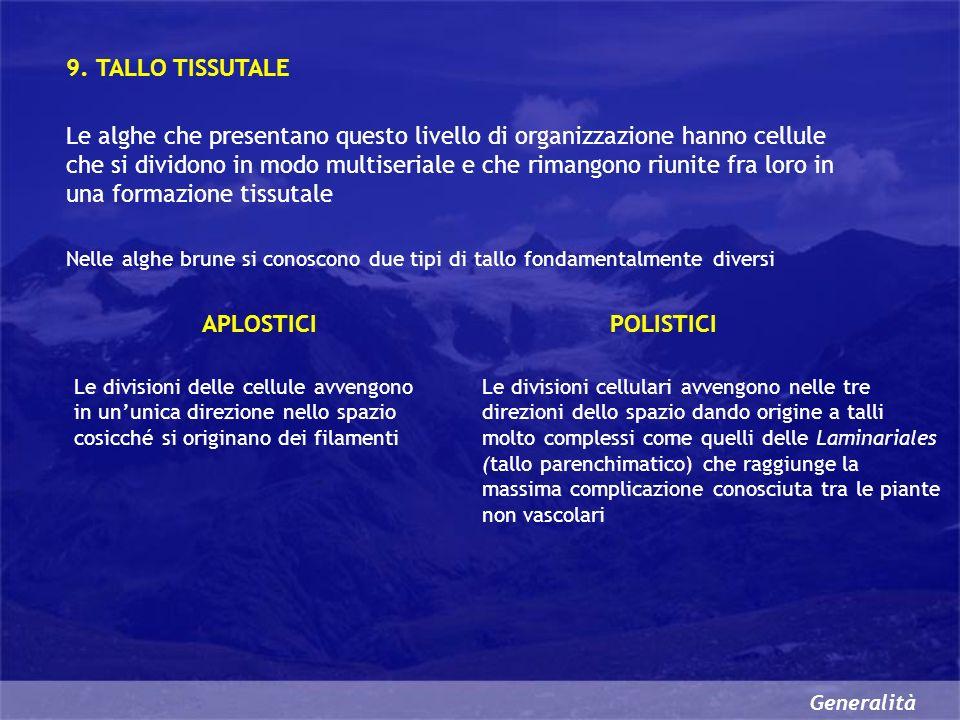9. TALLO TISSUTALE