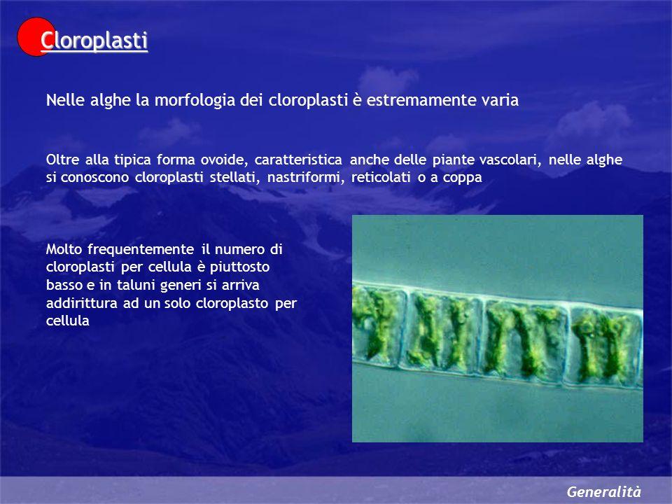 Cloroplasti Nelle alghe la morfologia dei cloroplasti è estremamente varia.