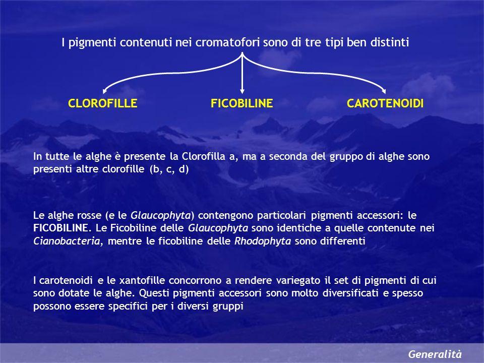 CLOROFILLE FICOBILINE CAROTENOIDI