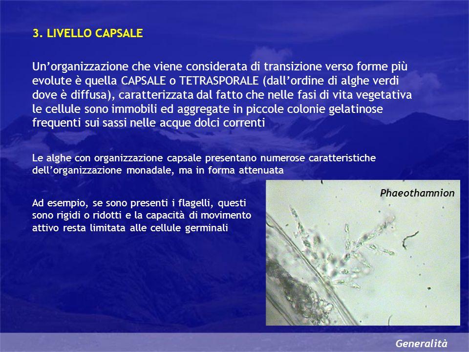 3. LIVELLO CAPSALE
