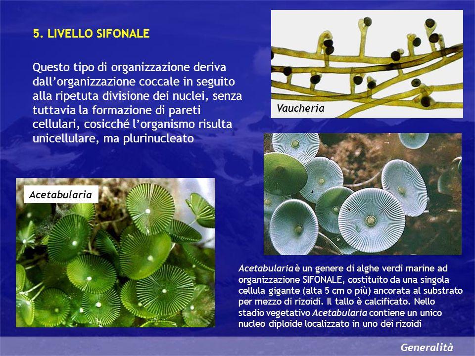 5. LIVELLO SIFONALE