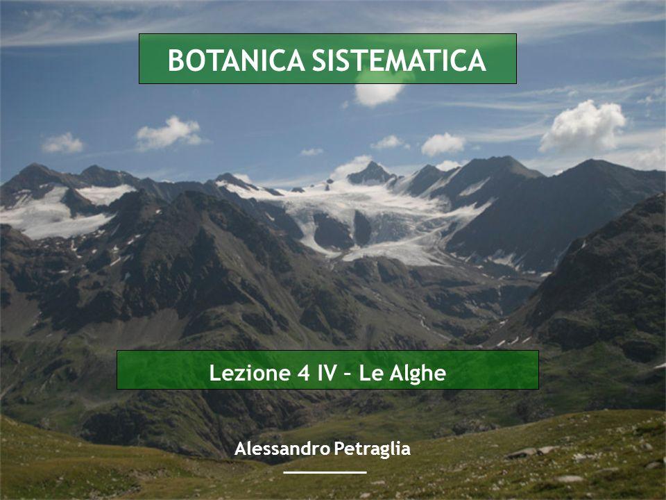 BOTANICA SISTEMATICA Lezione 4 IV – Le Alghe Alessandro Petraglia