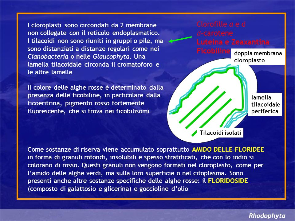 Clorofille a e d b-carotene Luteina e Zeaxantina Ficobiline
