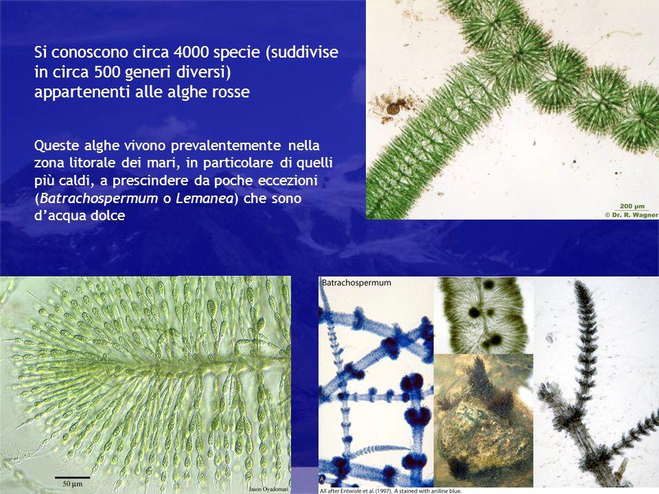 Si conoscono circa 4000 specie (suddivise in circa 500 generi diversi)
