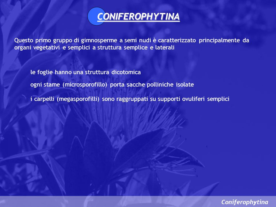 CONIFEROPHYTINA