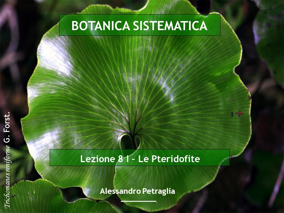 Lezione 8 I – Le Pteridofite