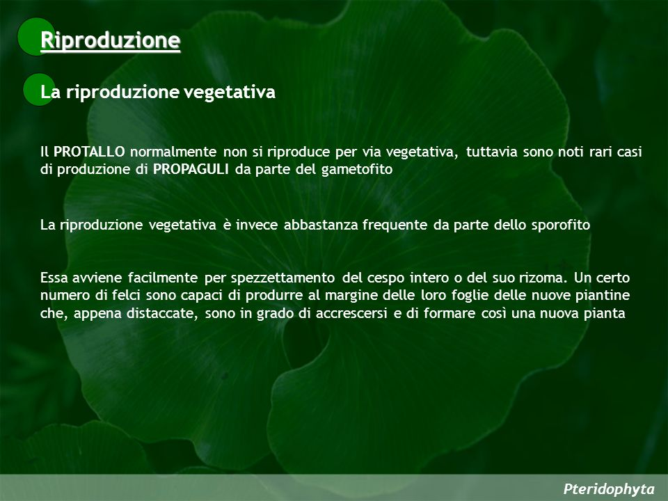 Riproduzione La riproduzione vegetativa
