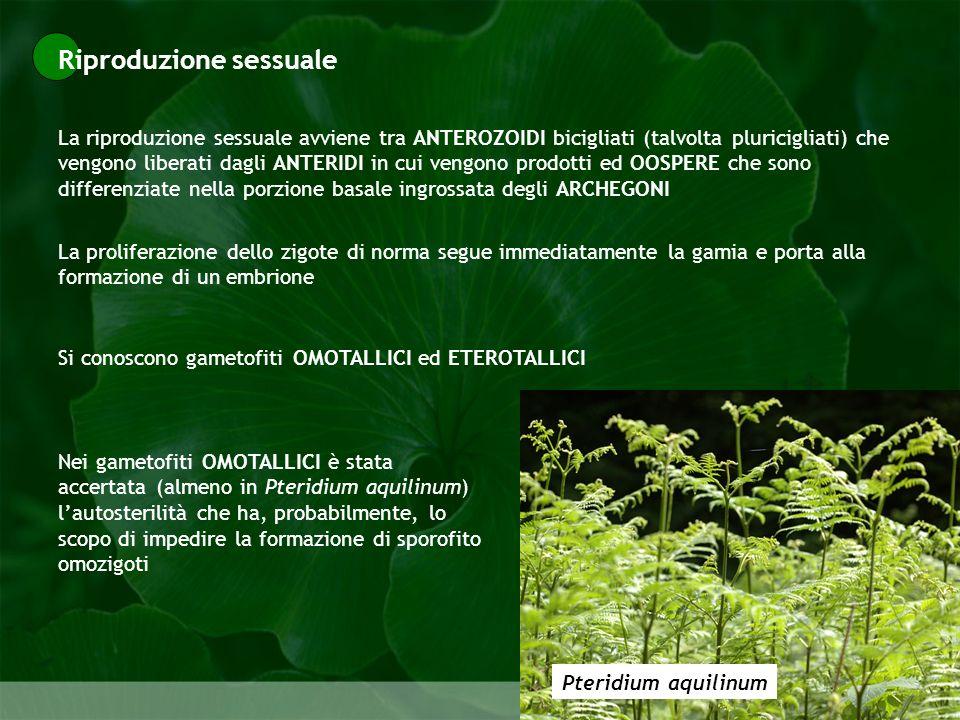 Riproduzione sessuale