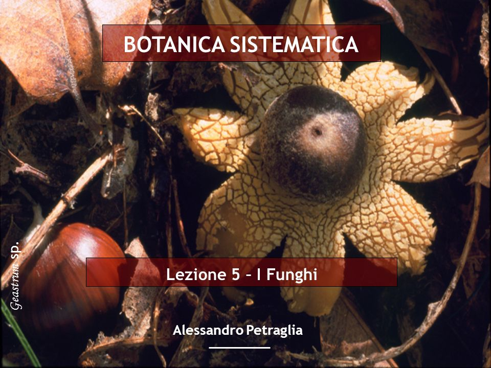 BOTANICA SISTEMATICA Lezione 5 – I Funghi Geastrum sp.