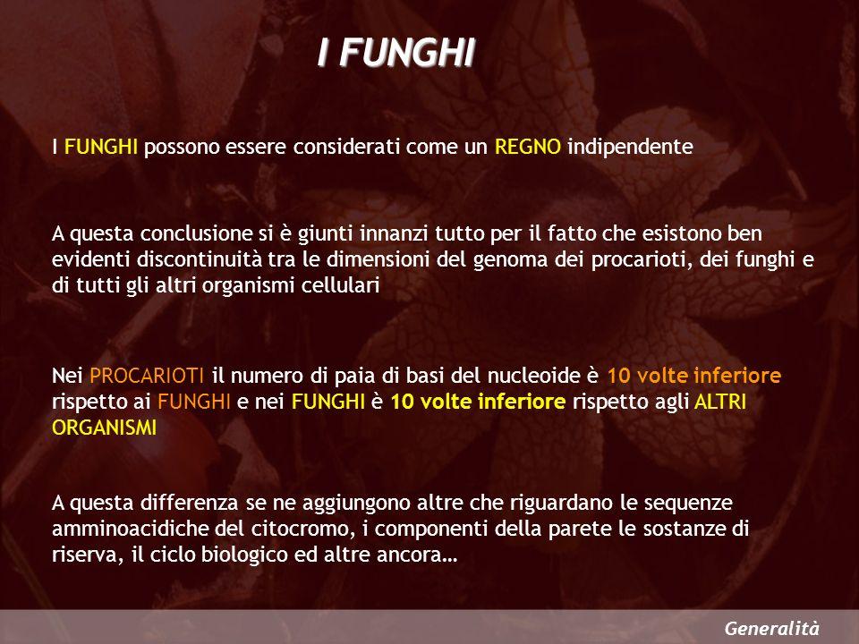 I FUNGHI I FUNGHI possono essere considerati come un REGNO indipendente.