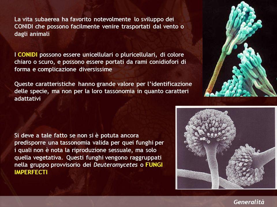 La vita subaerea ha favorito notevolmente lo sviluppo dei CONIDI che possono facilmente venire trasportati dal vento o dagli animali
