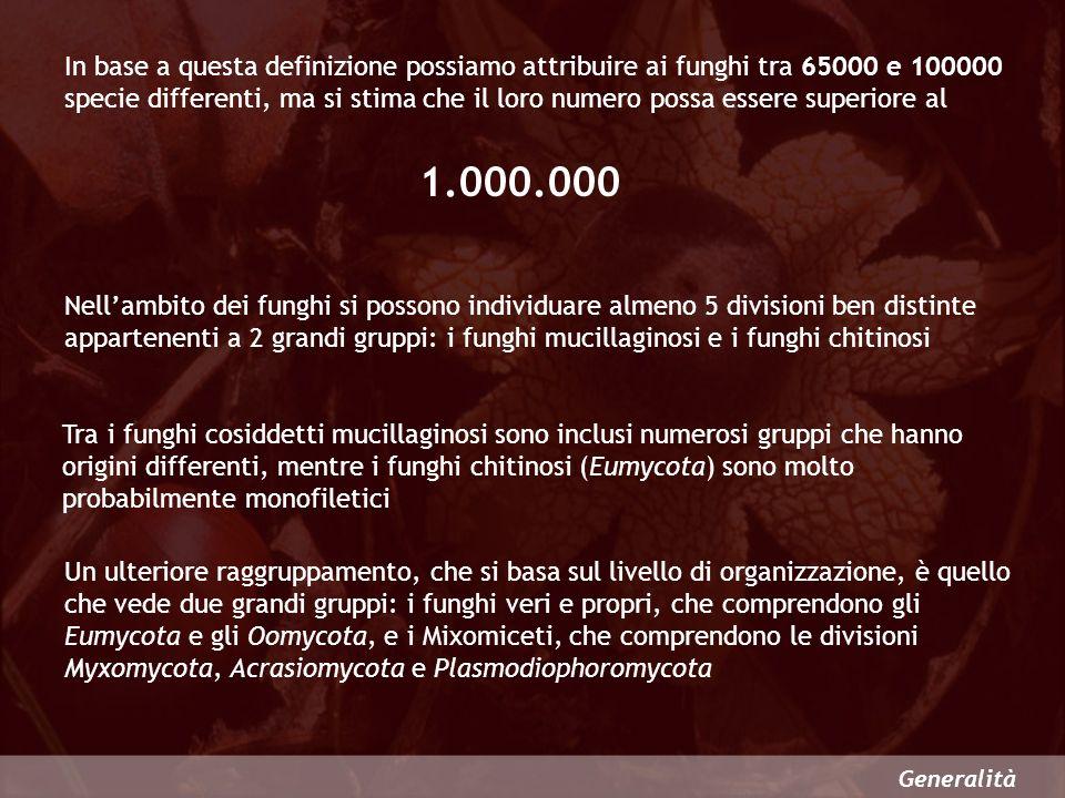 In base a questa definizione possiamo attribuire ai funghi tra 65000 e 100000 specie differenti, ma si stima che il loro numero possa essere superiore al