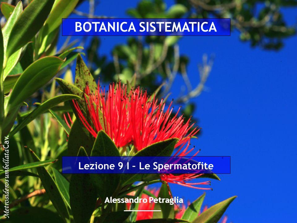 Lezione 9 I – Le Spermatofite