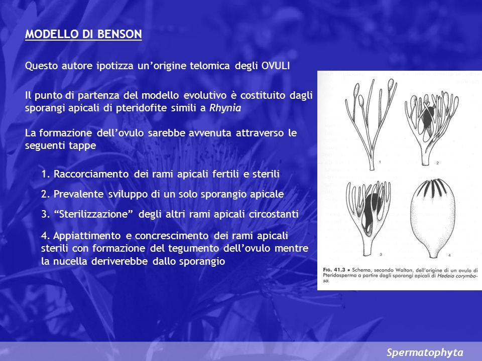 MODELLO DI BENSON Questo autore ipotizza un'origine telomica degli OVULI.