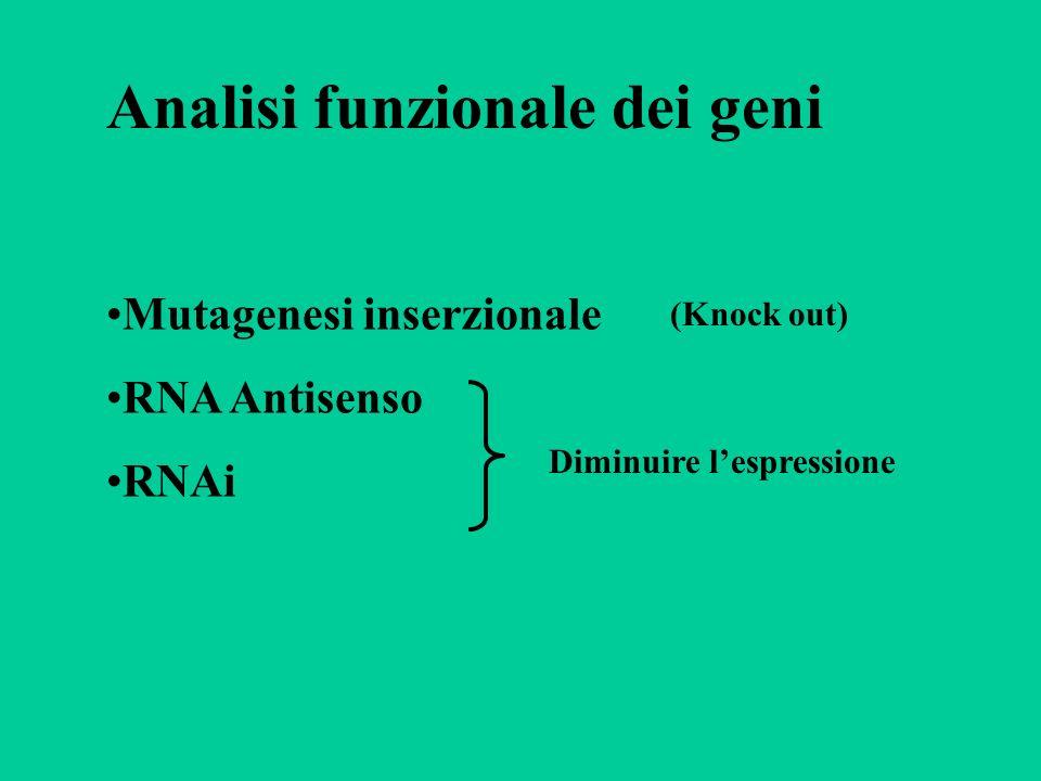 Analisi funzionale dei geni