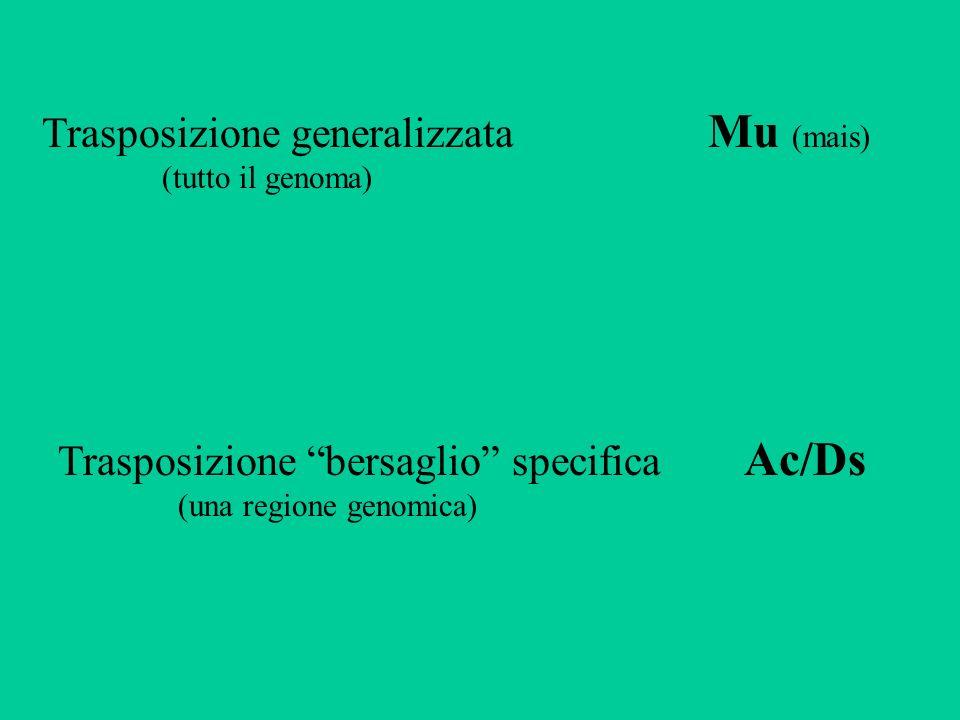 Trasposizione generalizzata Mu (mais)