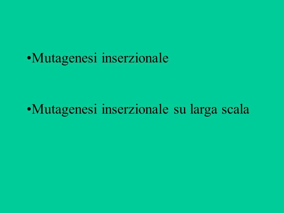 Mutagenesi inserzionale