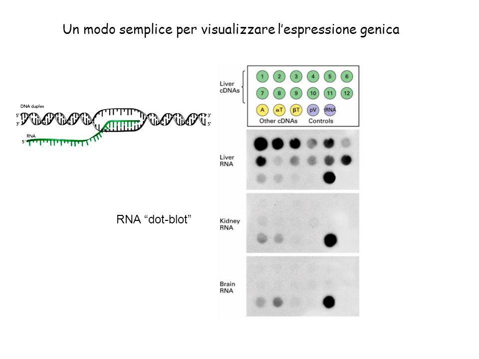 Un modo semplice per visualizzare l'espressione genica