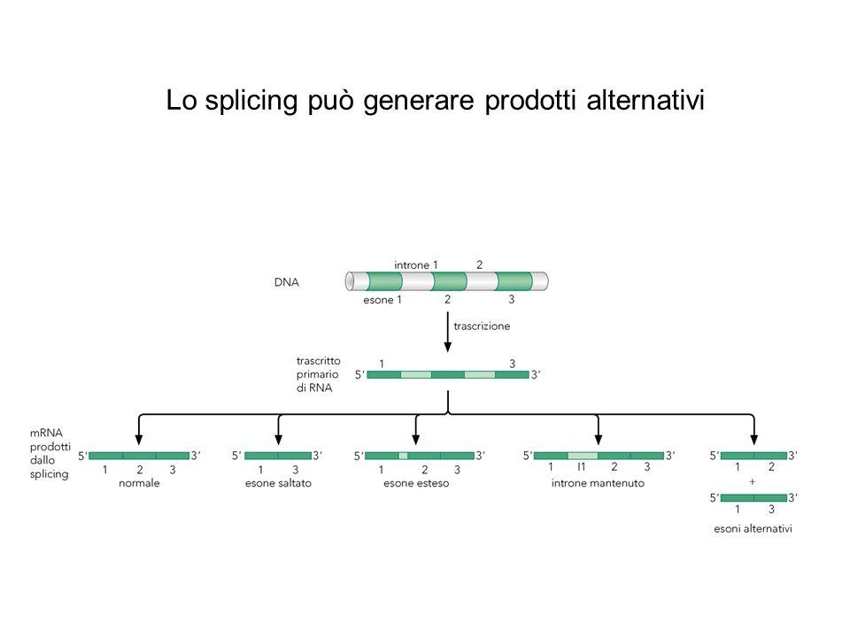 Lo splicing può generare prodotti alternativi