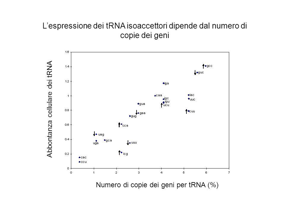 L'espressione dei tRNA isoaccettori dipende dal numero di copie dei geni