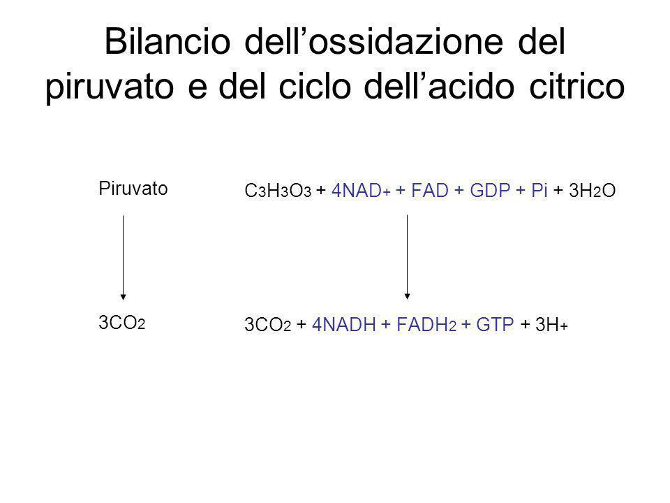 Bilancio dell'ossidazione del piruvato e del ciclo dell'acido citrico