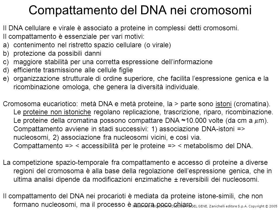 Compattamento del DNA nei cromosomi