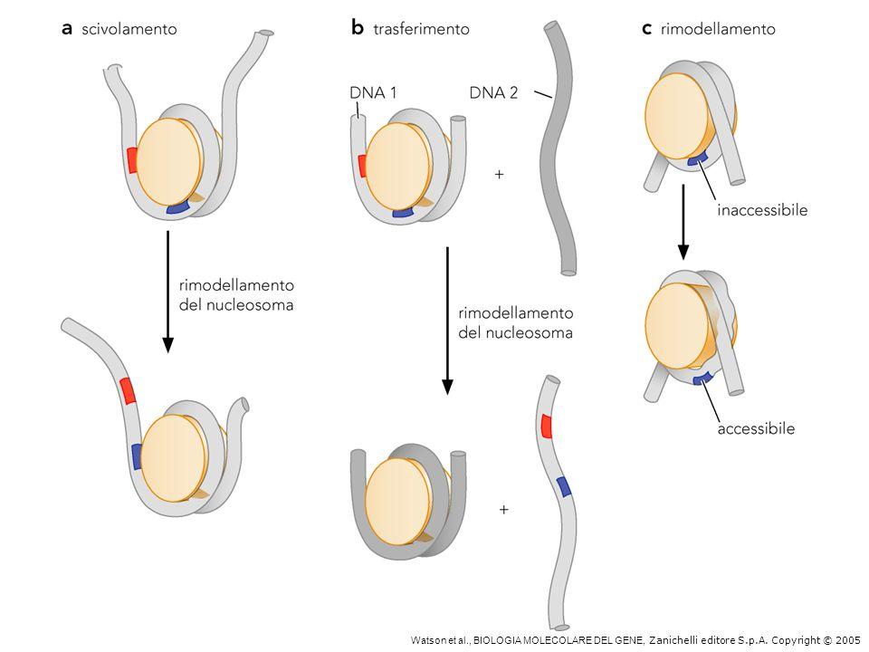 Complessi di rimodellamento nucleosomico